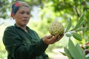 Lạng Sơn thành lập tổ công tác hỗ trợ tiêu thụ nông sản
