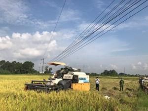 Hải Dương: 2 người đàn ông tử vong bên máy gặt lúa
