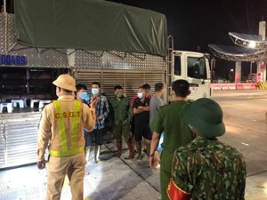 Quảng Ninh: 4 người núp trong xe chở lợn để 'thông chốt'