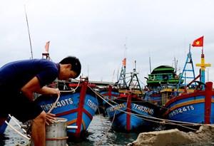 [ẢNH] Ngư dân Thừa Thiên - Huế khẩn trương neo đậu tàu thuyền trước khi bão số 5 đổ bộ