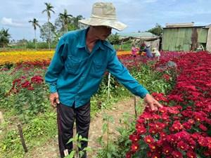Quảng Ngãi: 2 sào hoa của nông dân bị kẻ gian rắc muối sát hại