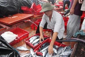 Quảng Nam: Ngư dân vừa tiêu thụ hải sản vừa hối hả phòng, chống bão số 5