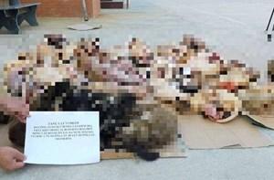 Phát hiện 2 tạ động vật hoang dã tại một nhà hàng ở Thanh Hóa