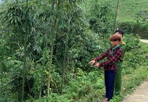 Lào Cai: Sợ bị chia đất, anh trai nhẫn tâm xuống tay sát hại em ruột mới 3 tuổi