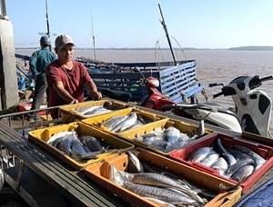 Nhật Bản thông qua Đạo luật Cấm nhập khẩu hải sản đánh bắt bất hợp pháp