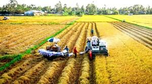 Vụ Đông Xuân 2020 - 2021: Được mùa lúa, giá bán cao