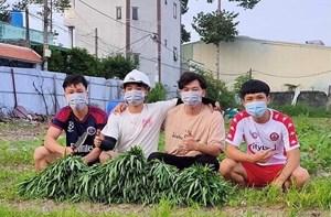 Nhóm nam sinh viên trồng rau hỗ trợ người dân vùng dịch