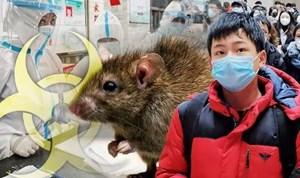 WHO đang giám sát trường hợp bệnh dịch hạch tại Trung Quốc