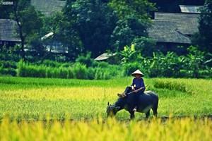 Tiếng Việt là mẹ