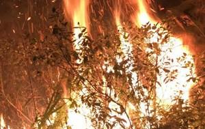 7,3 ha rừng bị thiệt hại trong vụ cháy tại huyện Sóc Sơn