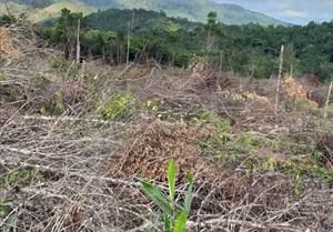 Bắt giam Chủ tịch Công ty trong vụ phá 30.000 m2 rừng để 'trồng rừng'