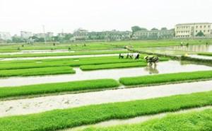Đảm bảo đủ điện phục vụ bơm nước gieo cấy vụ Đông Xuân 2020-2021