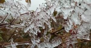 Sa Pa 'đông cứng' trong băng tuyết, đỉnh Khau Phạ cũng 'hóa đá'
