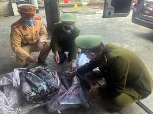 Phạt hơn 100 triệu đồng hai đối tượng giết, vận chuyển thịt nai rừng