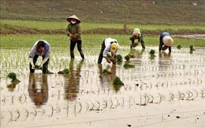 Gần 59% diện tích đã có nước gieo cấy vụ đông – xuân