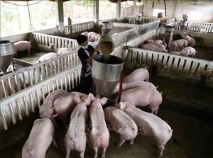 Chăn nuôi theo hướng công nghiệp