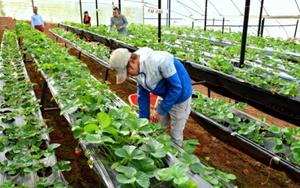 Hàn Quốc cho phép lao động Việt hết hạn hợp đồng ở lại