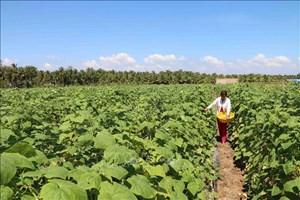 Trà Vinh: Thúc đẩy chuyển đổi cây trồng vật nuôi