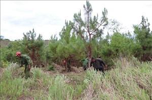 Tăng cường bảo vệ rừng vùng trọng điểm