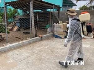 Điện Biên: Tiêu hủy đàn lợn nhiễm dịch tả lợn châu Phi tại Mường Nhé