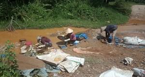 Phức tạp vàng tặc ở Bồng Miêu