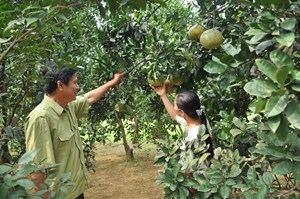 Giảm nghèo nhờ đổi mới cách nuôi trồng