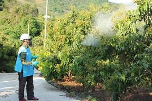 Sơn La: Thu gom, tiêu hủy bao gói thuốc bảo vệ thực vật