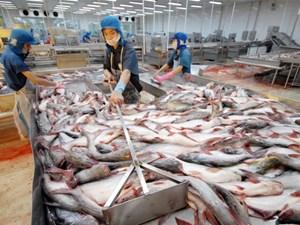 Hậu Giang: Cá tra ế ẩm, lượng tồn lên tới 300 tấn
