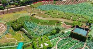 Hà Nội: Thung lũng hoa Hồ Tây 'mọc' trái phép trên đất dự án