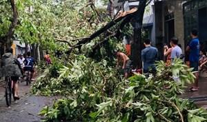 Bão số 5 tàn phá 22.000 ngôi nhà, làm 3 người tử vong