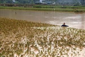 Nước lũ lên cao, Lào Cai lên phương án sơ tán dân