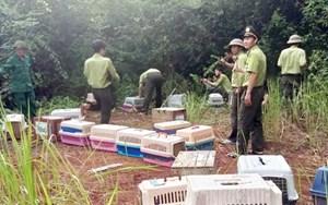 Lâm Đồng: Xử phạt đối tượng vận chuyển lâm sản trái phép