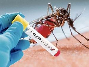 Không chủ quan với sốt xuất huyết