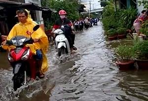 Kiên Giang: Hơn 6.300 căn nhà, 115 điểm trường bị ngập