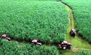 Xây dựng vùng nguyên liệu nông sản: Cần sự liên kết chặt chẽ