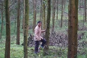 Phát triển thị trường các-bon để cứu rừng