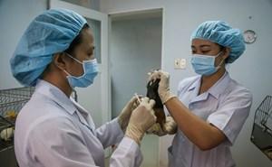 Việt Nam sẽ sớm thử nghiệm vaccine Covid-19 trên người