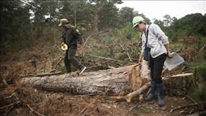 Phạt đối tượng đầu độc rừng thông 11 triệu đồng