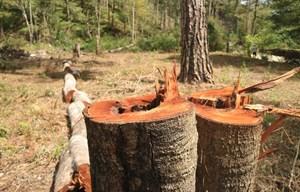 Giữ rừng nhưng ai giữ?