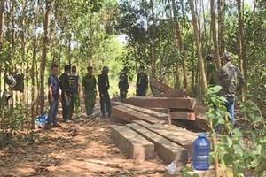 Bắt tạm giam nguyên giám đốc công ty lâm nghiệp vì để mất rừng, xâm lấn rừng