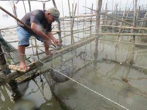 Thừa Thiên - Huế: Phát triển chuỗi giá trị thủy sản vùng nước lợ Tam Giang - Cầu Hai