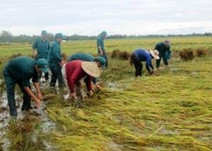 Xuất cấp hạt giống hỗ trợ 4 tỉnh bị thiệt hại do thiên tai