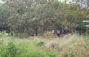 Phát hiện thi thể người đàn ông đang phân hủy trên ngọn cây