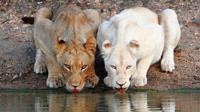 Vẻ đẹp của vương quốc động vật.