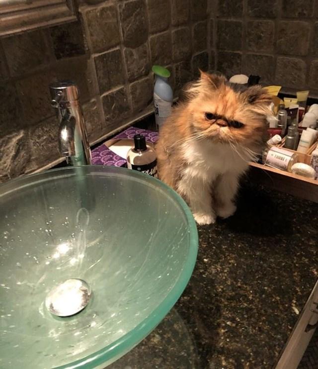 """""""Tôi đã nghĩ con mèo này là giả cho đến khi nó quay đầu lại và nhìn tôi""""."""