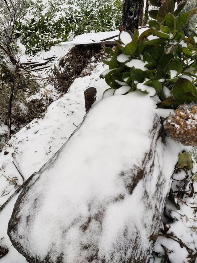 Băng tuyết xuất hiện ở Y Tý hệt như quang cảnh ở các xứ lạnh Châu Âu.