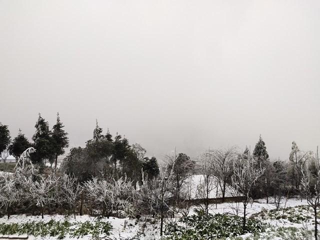Chia sẻ với PV, anh Tuấn Ngọc (người dân ở Y Tý) cho biết, tuyết bắt đầu rơi từ 22h đêm ngày 10/ 1. Đến 9h sáng 11/1, tuyết vẫn đang tiếp tục rơi rất dày, nhiệt độ xuống thấp dưới 0 độ C.
