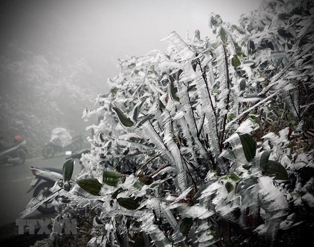 Một số hình ảnh sương muối, băng giá tại đỉnh đèo Khau Phạ.(Ảnh: Tuấn Anh-A Lù/TTXVN).