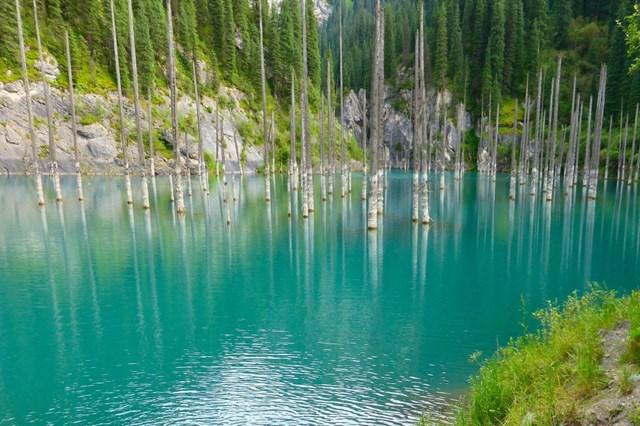Khu rừng mọc ngược trong hồ Kaindy, Kazakhstan.(Nguồn: B.S).
