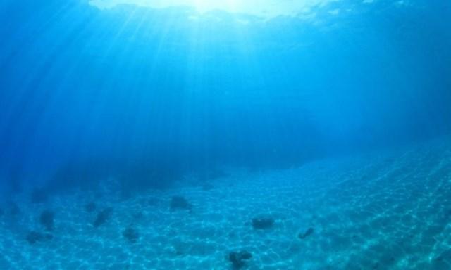 Robot được dùng để thám hiểm vùng đáy biển sâu 2.500m. (Nguồn: worldwildlife.org).